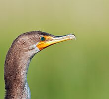 Double Crested Cormorant Close-up by Michael Mill