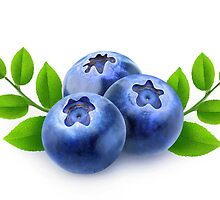Blueberries with branches and leaves by 6hands