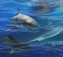 SWIMMING WITH SHARKS by Paul Quixote Alleyne