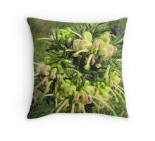 Grevillea 'Hills Jubilee!' now with clusters of flowers. Throw Pillow