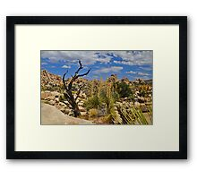 Desert Flora, Joshua Tree National Park Framed Print