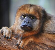 Howler monkey by Savannah Gibbs