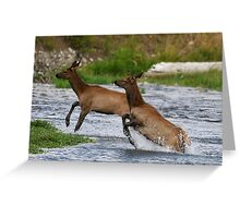 Yellowstone 2011 - Elk Greeting Card