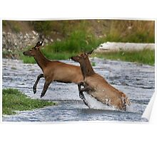 Yellowstone 2011 - Elk Poster