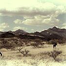 Open Range by DesertDweller