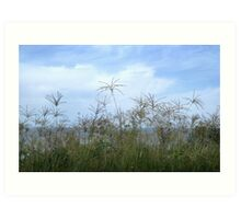 Grasses by Water Art Print