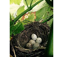Nest in a Vineyard Photographic Print