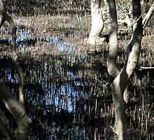 Marshy Mangroves in the Park by ShineArt
