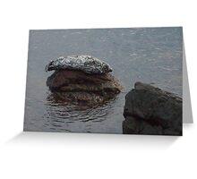 Seal on Rocks at Lime Kiln Park 2 Greeting Card