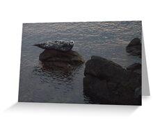 Seal on Rocks at Lime Kiln Park 4 Greeting Card