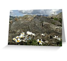 Daisies on mountains  Greeting Card