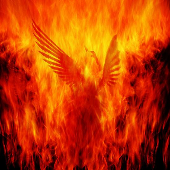 Phoenix Rising by Andrew Paranavitana