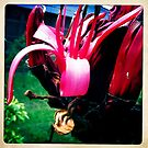 Gymea Lily Part 2 by Marita