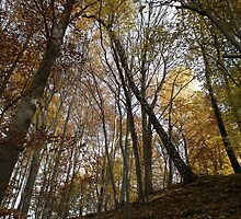 autumn in the deciduous forest by RosiLorz
