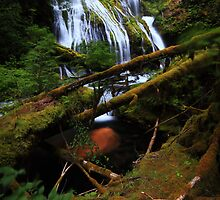 Panther Creek Falls III by Tula Top