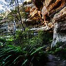 Walls Cave, Blue Mountains, Australia by Roger Barnes