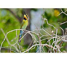 Rainbow Bee Eater Photographic Print