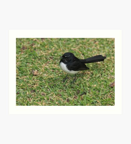 Willy-Wagtail Art Print
