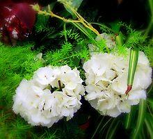 Soft White  by shelleybabe2