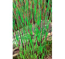 Two tone grass Photographic Print