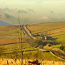 Dales Country Road by Trevor Kersley