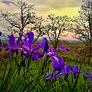 Wild Beauty ~ Wild Iris ~ by Charles &amp; Patricia   Harkins ~ Picture Oregon