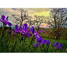 Wild Beauty ~ Wild Iris ~ Photographic Print