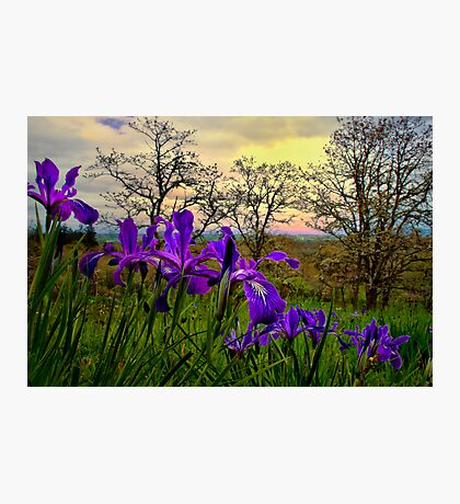 Wild Beauty ~ Wild Iris ~ Photographic Print