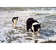 """""""Surf's Up, Border Collie Style."""" Photographic Print"""
