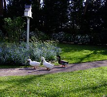 Duck Crossing by Gabrielle  Lees