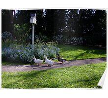 Duck Crossing Poster