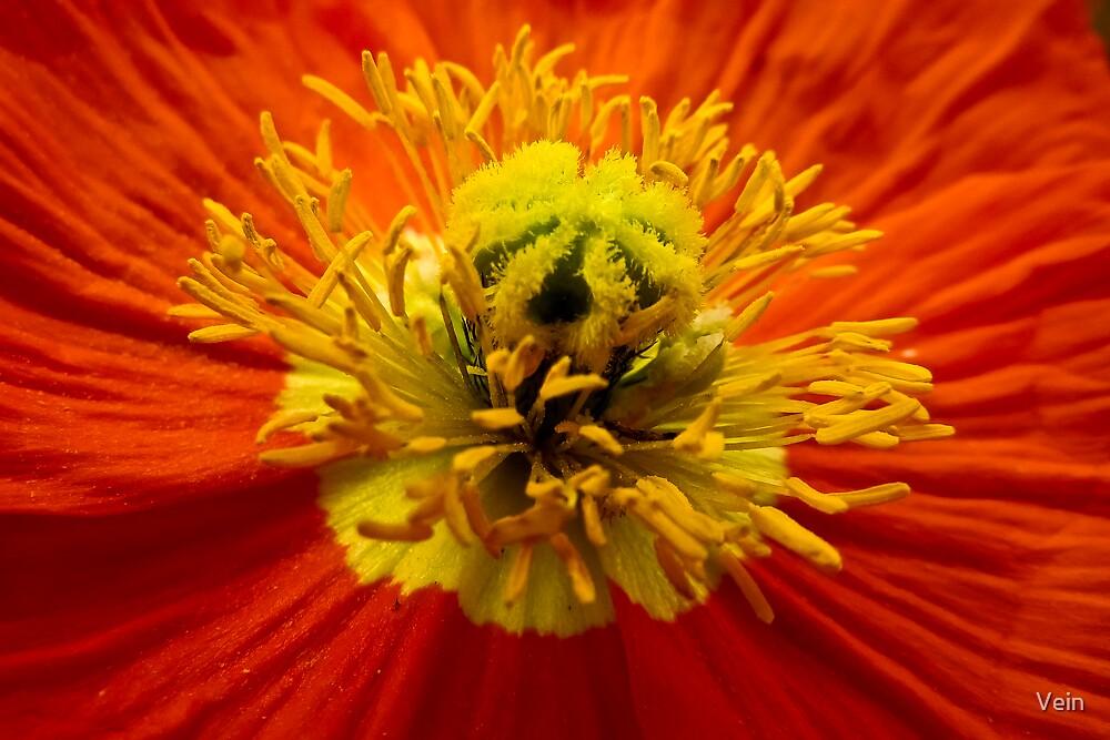 Epicentre of Pollen by Vein
