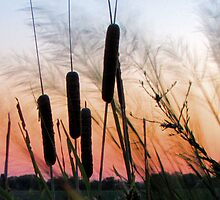 Sunrise over the Cattails by aprilann
