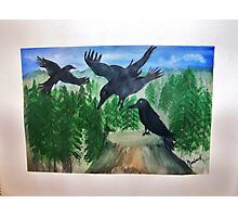 Magpies Photographic Print