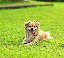 Dog by abhinandm