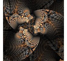 Trilobite Photographic Print