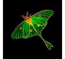 Wisdom on Wing™ Luna Moth Photographic Print