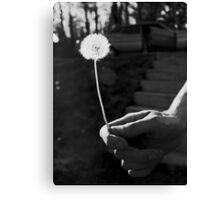 Backlit Dandelion Canvas Print