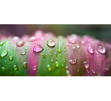Raining , Mission Beach , FNQ Photographic Print