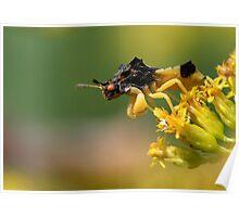 Jagged Patience / Jagged Ambush Bug Poster