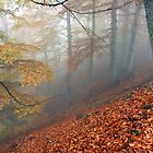 Carpet of leaves by photoenastros