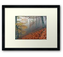 Carpet of leaves Framed Print