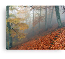 Carpet of leaves Canvas Print