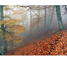 Carpet of leaves Photographic Print