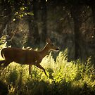 Deer in the Forest by KatsEyePhoto