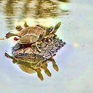 Turtle Soup by DottieDees