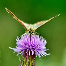 Small Copper by Russell Couch