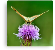 Small Copper Canvas Print