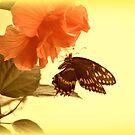 Butterfly Sun by DottieDees