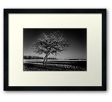 Bare Tree and the Papal Cross - Phoenix Park Framed Print